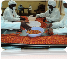 Mace foods Processing of Products